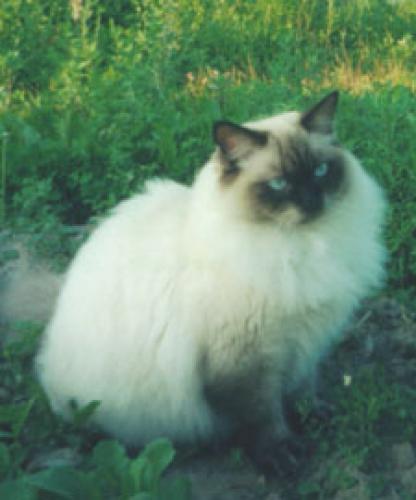 Алиса Львиное Сердце (фото)