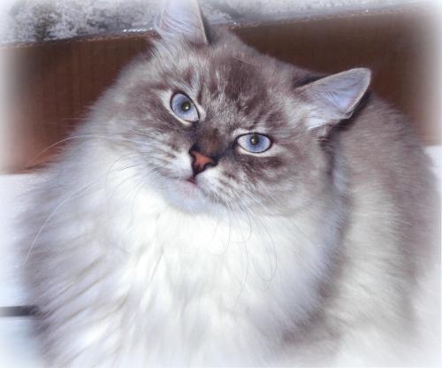 Сильвия Великий Охотник (фото)