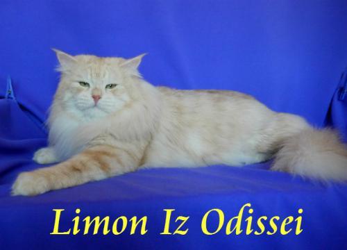 Лимон Из Одиссеи (фото)