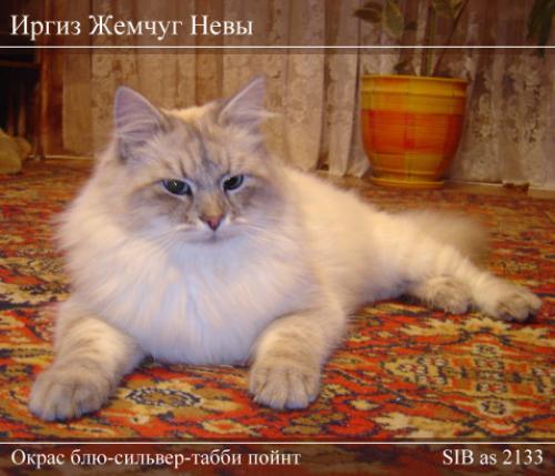 Иргиз Жемчуг Невы (фото)