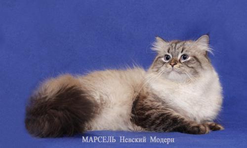 Марсель Невский Модерн (фото)