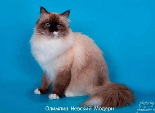 Олимпия Невский Модерн (фото)