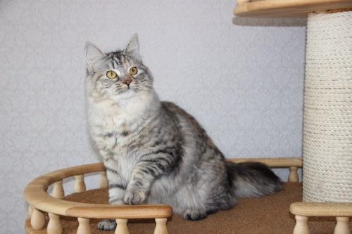 Шанель Грасиона (фото)