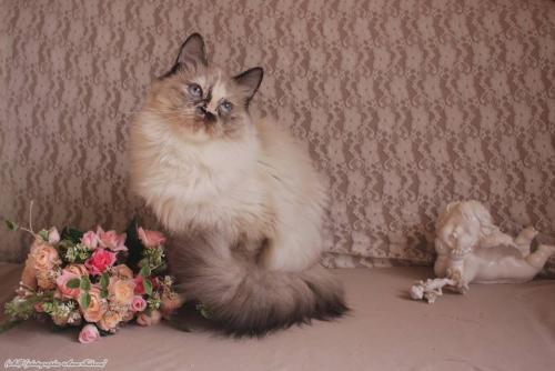 Хлоя Сибирская Рапсодия (фото)
