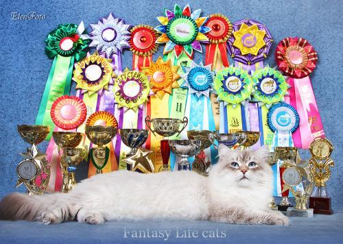 Fabian Fantasy Life (фото)