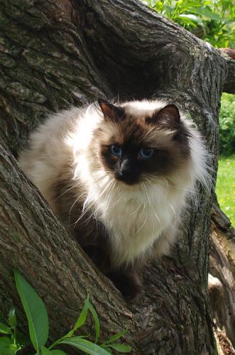 Фадель Львиное Сердце (фото)