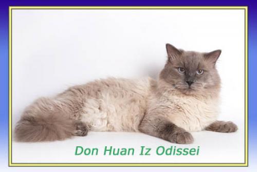 Дон Жуан из Одиссеи (фото)